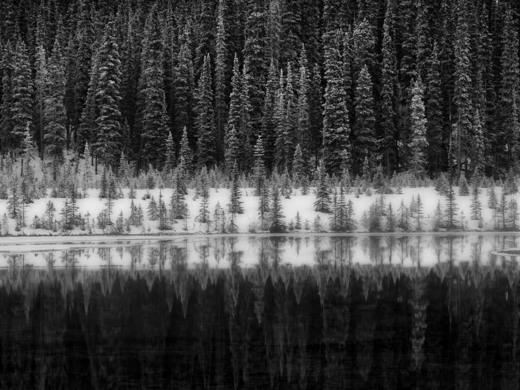 "Steve Zigler ""Reflections, Icefields Parkway, Banff National Park"""