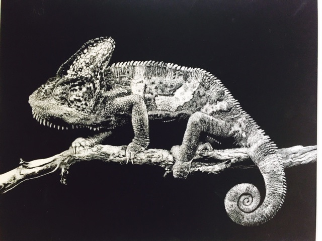 """Morgan Meschede """"A Chameleon Hours Later"""""""