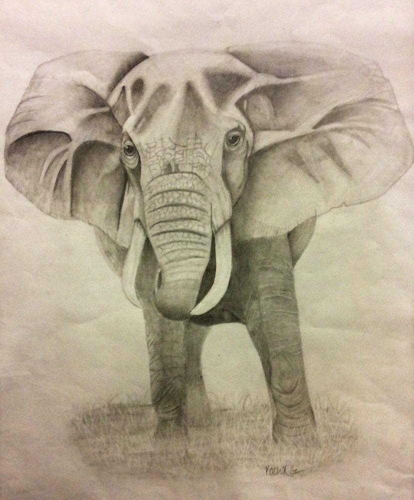 "Rachel Goldschmitt ""Elephant King"""